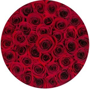 The Million Roses Accents - THE MILLION ROSES— in Red
